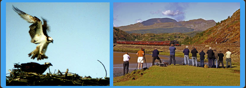 Things to do - Ospreys Nesting & Steam Trains